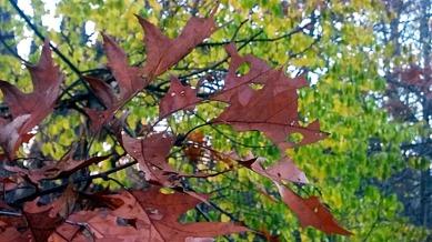 Leaf Sculpture 3