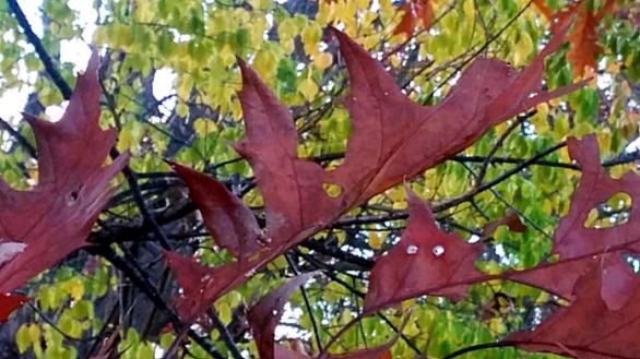 Leaf Sculpture 5