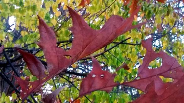Leaf Sculpture 4