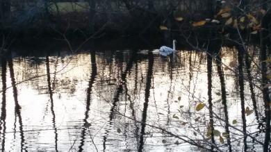 Swan River 1