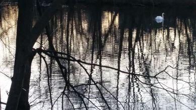 Swan River 2