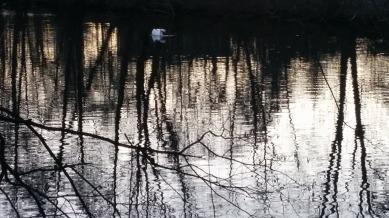 Swan River 3