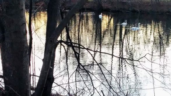 Swan River 4
