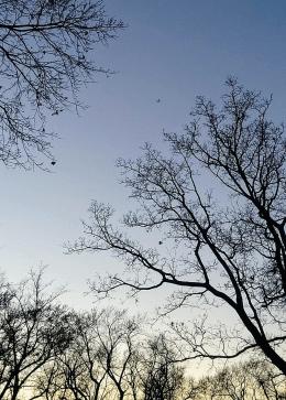 Clear Sky 1a