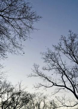 Clear Sky 1b