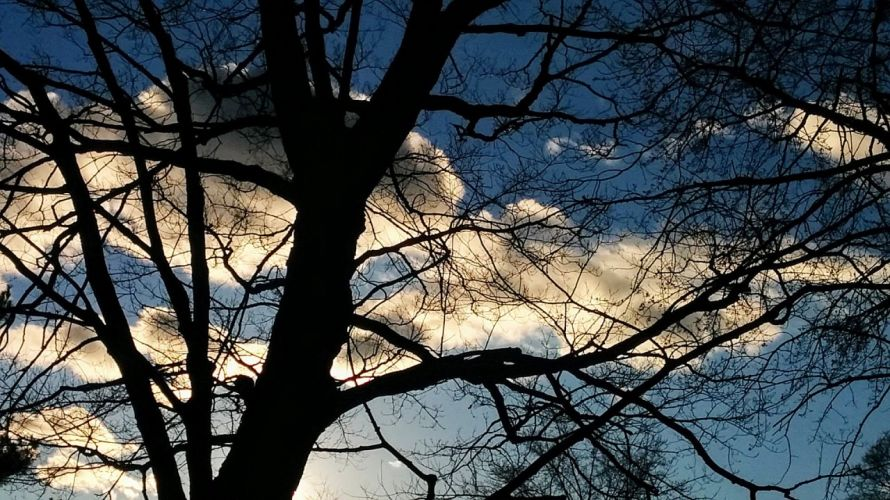 Backlit Tree 1