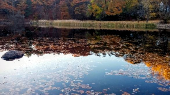 Hill's Pond in Late Fall 1