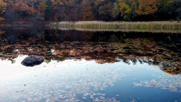 Hill's Pond in Late Fall 2