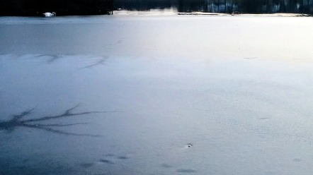 Ice and Swans 3