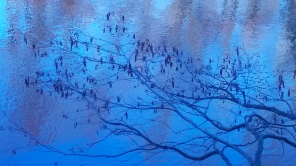 Branches on Blue 2