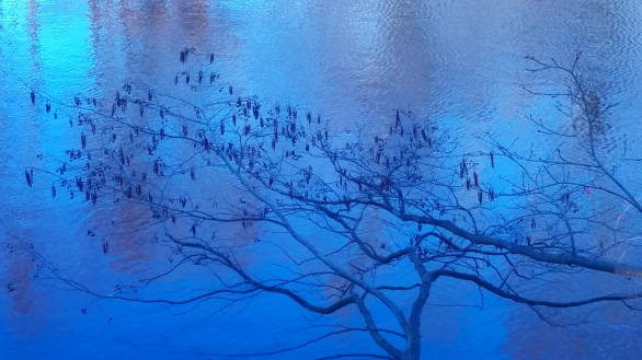 Branches on Blue 1