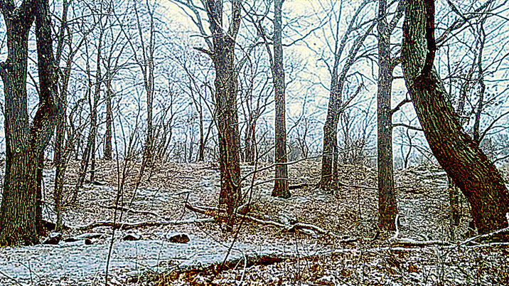 Winter at Mystic River Reservation 3 ((Treatment 2)