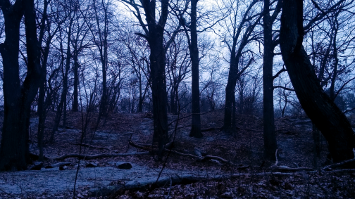 Winter at Mystic River Reservation 3