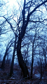 Winter at Mystic River Reservation 2