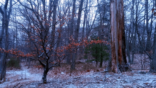 Winter at Mystic River Reservation 1