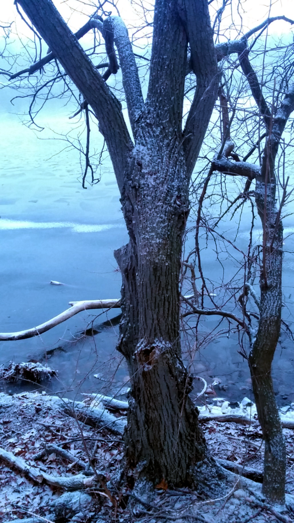 Winter at Mystic River Reservation 4b