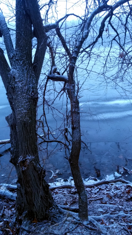 Winter at Mystic River Reservation 4a