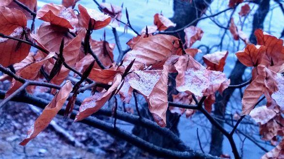 Foliage in Winter 1