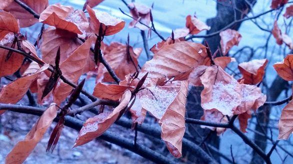 Foliage in Winter 2