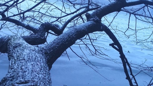 Winter Abstracts by the Lake 1