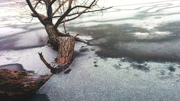 Winter Abstract by the Lake 9b