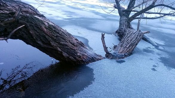 Winter Abstract by the Lake 11a