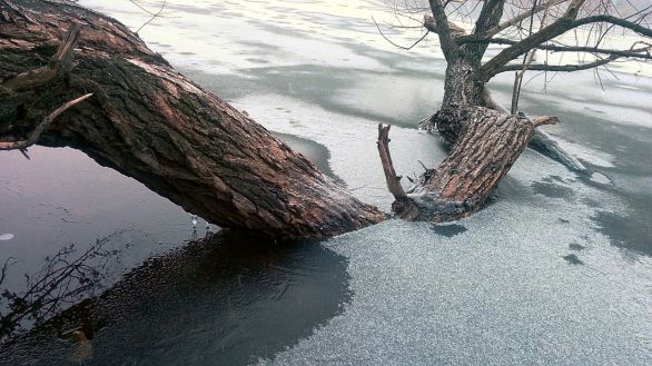 Winter Abstract by the Lake 11b
