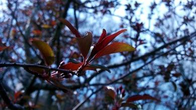 New Foliage 1