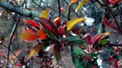 New Foliage 2