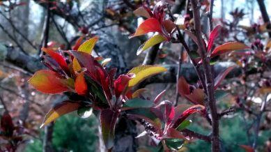 New Foliage 3