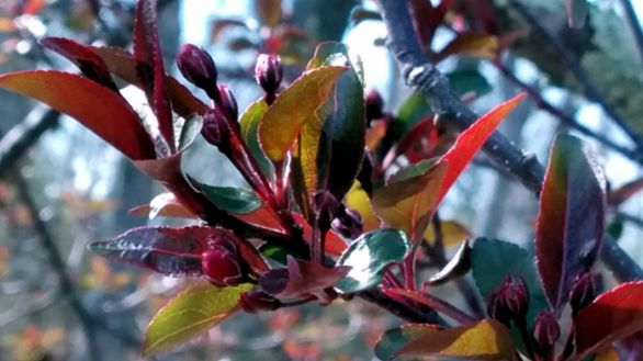 New Foliage 4