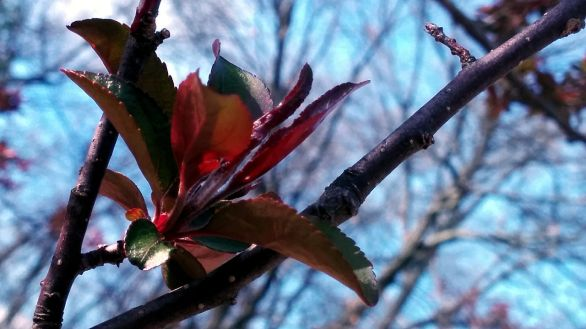 New Foliage 5