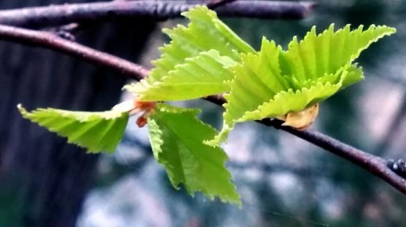 Spring Green 4