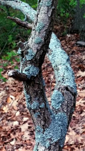 Twisted Tree 2b