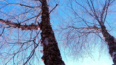 Flaky Trees (Spring) 4