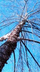 Flaky Trees (Spring) 2