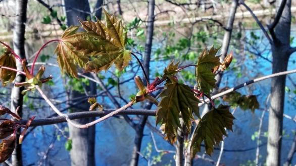 Fresh Foliage by Mystic River 2