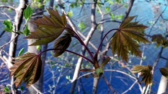 Fresh Foliage by Mystic River 4