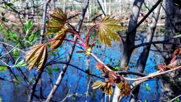 Fresh Foliage by Mystic River 1