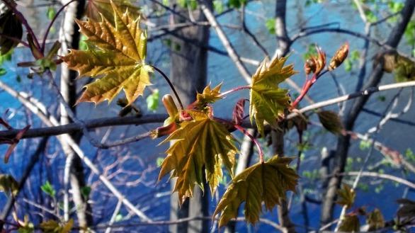 Fresh Foliage by Mystic River 3