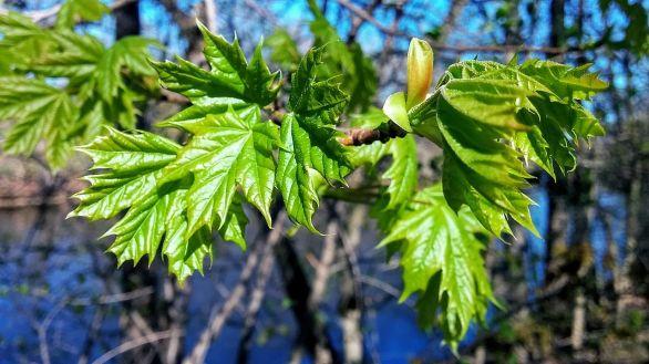 Spring Green 5