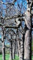 Medusa's Arbor4
