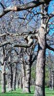 Medusa's Arbor5