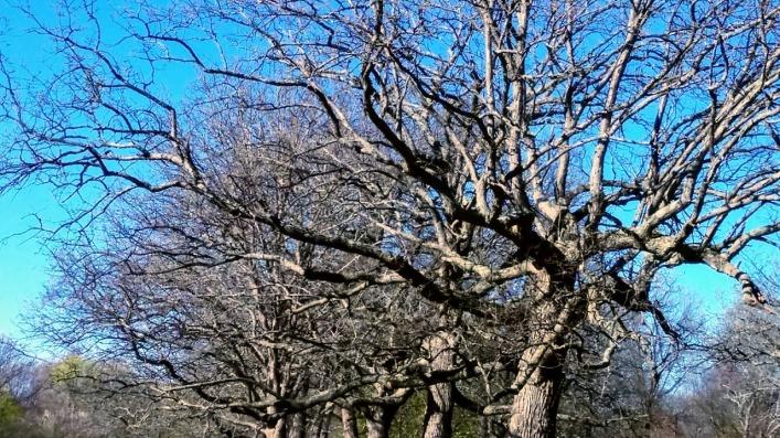 Medusa's Arbor 3
