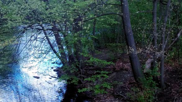 Alewife Brook in Spring 1