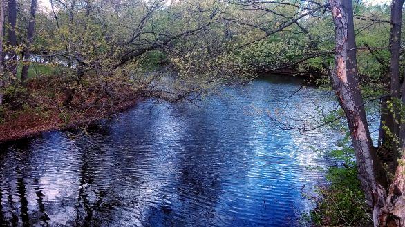 Alewife Brook in Spring 2