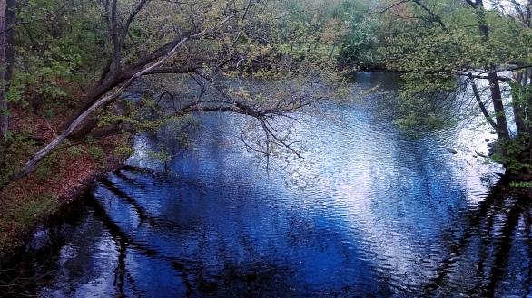 Alewife Brook in Spring 3