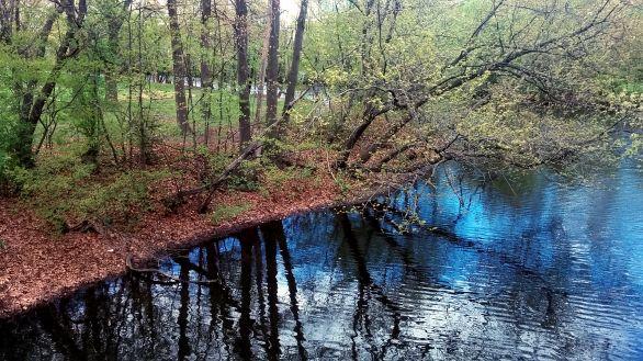 Alewife Brook in Spring 4