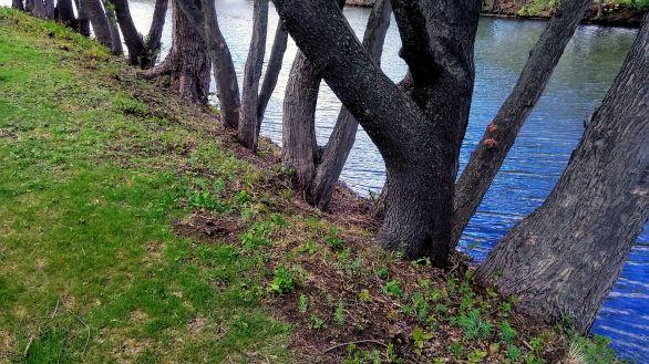By Mystic River 1b