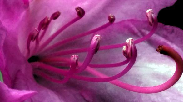 Inner Beauty 1
